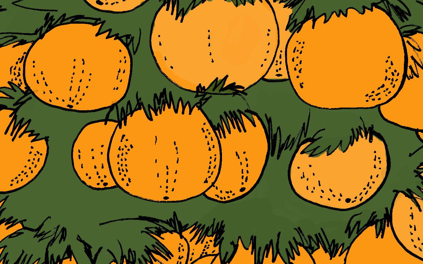 Resultado de imagem para charge laranja
